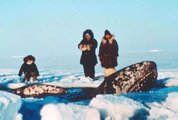 Vì ba con cá voi xám, Liên Xô và Mỹ đã bắt tay hợp tác ngay trong thời kỳ Chiến tranh Lạnh - Ảnh 3.