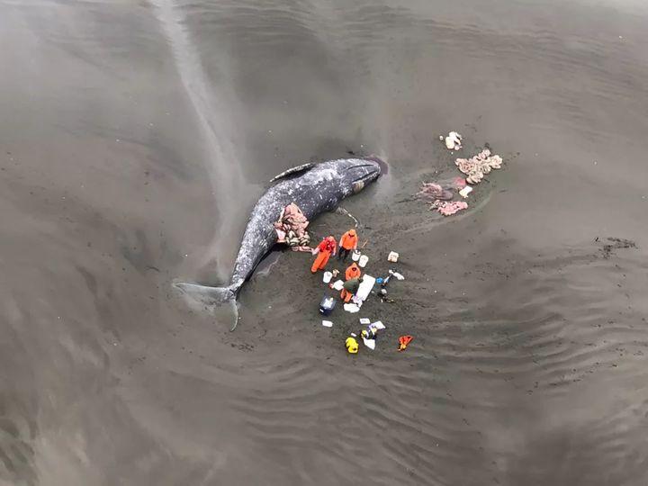 Vì ba con cá voi xám, Liên Xô và Mỹ đã bắt tay hợp tác ngay trong thời kỳ Chiến tranh Lạnh - Ảnh 4.
