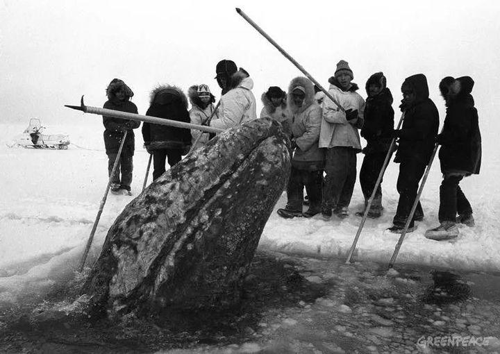 Vì ba con cá voi xám, Liên Xô và Mỹ đã bắt tay hợp tác ngay trong thời kỳ Chiến tranh Lạnh - Ảnh 7.