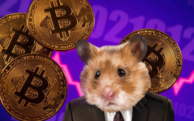 Chú chuột hamster tự giao dịch tiền số, tỷ suất sinh lời đạt gần 24% kể từ tháng 6 - Ảnh 1.