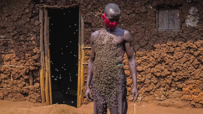 Người đàn ông tự xưng là Vua ong: điều khiển được ong như Tiểu long nữ, cả đời chưa bao giờ bị ong đốt - Ảnh 4.
