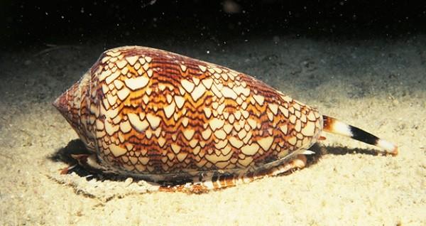 10 loài ốc sên