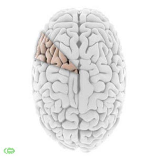 Những sự thật về bộ não ít người biết tới (phần 2)