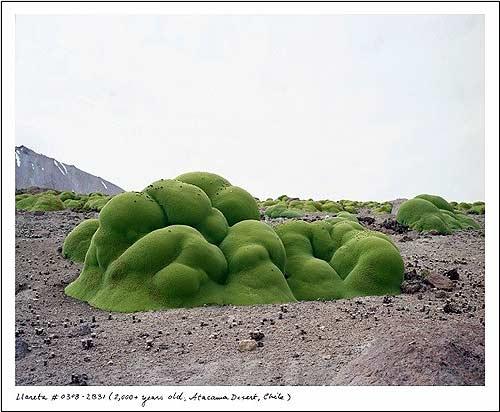 thực vật, nghìn năm tuổi, ứng dụng, nguồn nước, biển cả