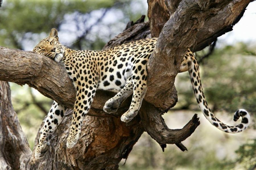 Những thói quen ngủ kỳ lạ ở các loài động vật