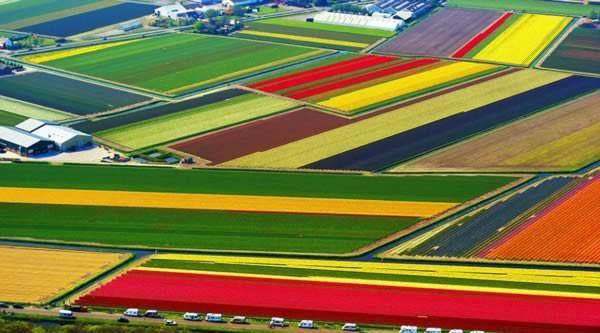 Từ tháng 3 đến tháng 8 hàng năm, những cánh đồng hoa tulip ở Lisse, Hà Lan lại tràn ngập sắc màu. Tuy nhiên, sự rực rỡ của chúng đạt mức cao nhất vào tháng 4, khi những bông hoa với đủ màu sắc tím, hồng, đỏ, vàng nở rộ, giống như những suối hoa muôn màu.