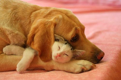Nghiên cứu mới cho thấy những người yêu mèo thông minh hơn những người yêu chó