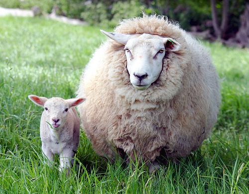Nếu con người chỉ sử dụng 10% bộ não, chúng ta sẽ không khác gì loài cừu.