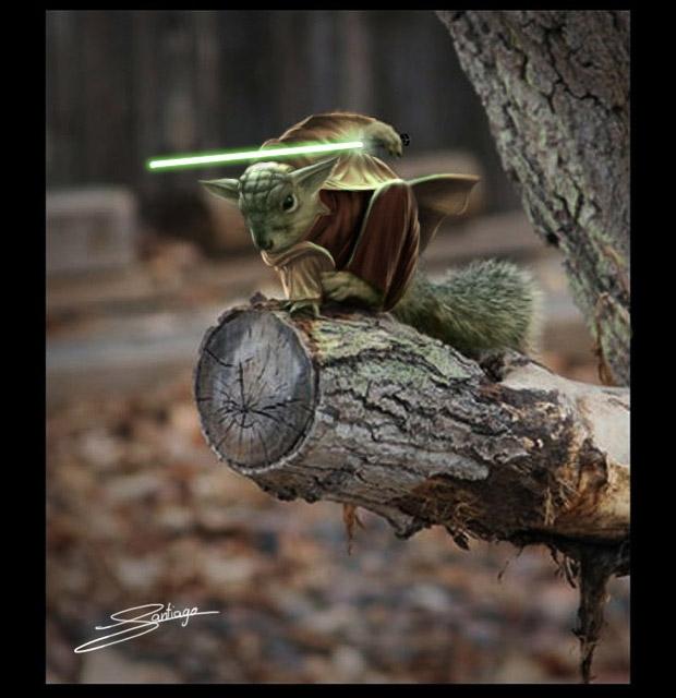 Yoda trong Star Wars.