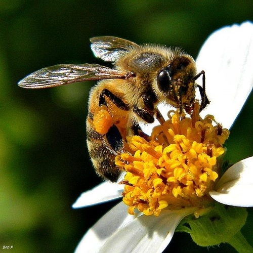 Các loài động vật tỏa mùi ngọt như kẹo, thơm như bơ (6)