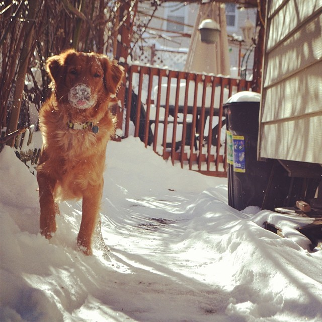 Chú chó này có vẻ điệu đà với son môi màu tuyết trắng.