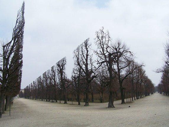 Những cái cây được cắt tỉa hoàn hảo trong công viên Schonbrunn.