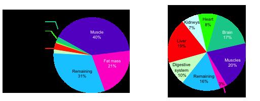 Đóng góp của các cơ quan trong quá trình trao đổi chất ở trạng thái nghỉ