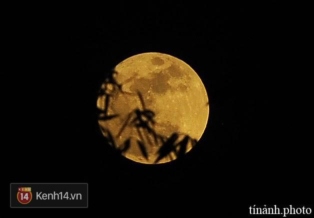 Mặt trăng càng trở nên to, đẹp hơn sau tán lá. (Ảnh: Võ Minh Tín)