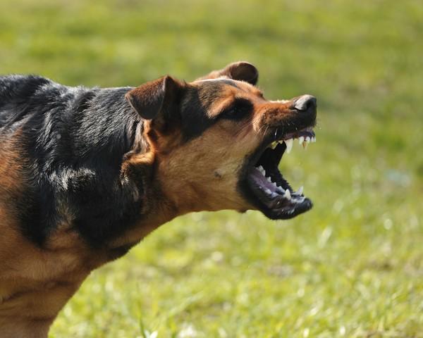 Bí kíp để không bị chó cắn cũng có thể là một meme có tính lan toả mạnh
