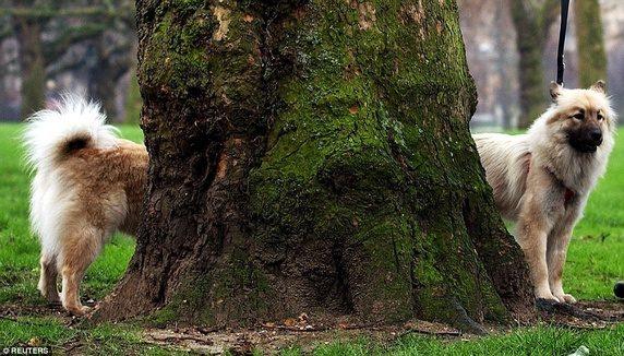 Chú chó trông như có thân mình cực dài nhưng thật ra trong bức ảnh này có đến hai con chó, chính cái cây đã khiến cho người xem thấy bối rối.