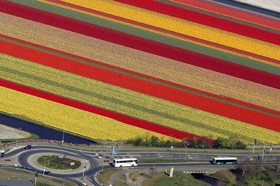 Cánh đồng hoa nhiều màu sắc đều nhau ở Hà Lan nhìn từ trên cao trông như được đổ màu vào.