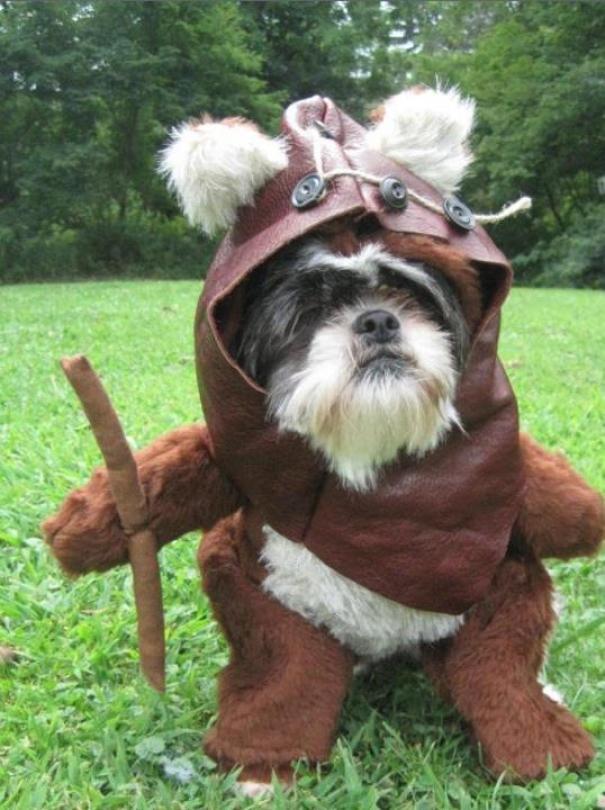 Đây là chó chứ có phải đồ chơi đâu mẹ!!
