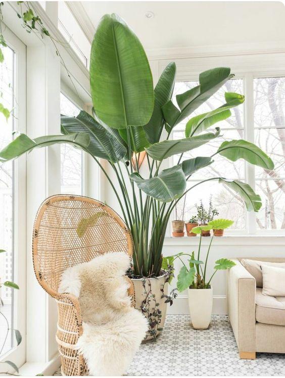 Kết hợp cùng màu vani, đồ mây tre đan... cùng cây cối của vùng nhiệt đới sẽ giúp không gian của bạn đậm chất local.