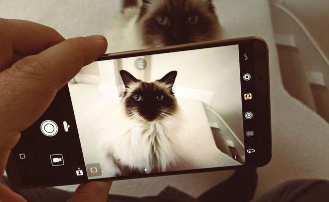 Có lẽ Huawei không để ý đến sự thật rằng nhận diện mèo là bài toán được Google sử dụng để mở ra một kỷ nguyên AI mới từ 5 năm trước khi Pixel 2 và Mate 10 ra mắt.
