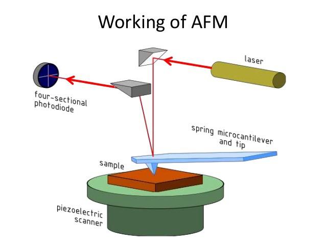 Cơ chế hoạt động của kính hiển bị lực nguyên tử