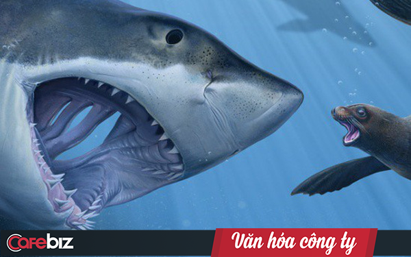 Tencent: Văn hóa kiểu tử cung của cá mập mẹ, cá mập con chưa ra đời sẽ cắn chết anh chị em để trở thành cá thể sống sót duy nhất - Ảnh 1.