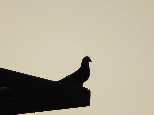 Thử ngược sáng. Có vẻ máy ảnh này khá phù hợp với những ai bắt đầu tập tễnh vào nhiếp ảnh và muốn chụp chim thú từ xa.