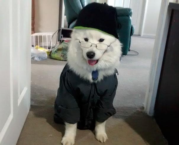 Bạn thân là bọn mặc đồ cho chó cực nhanh!