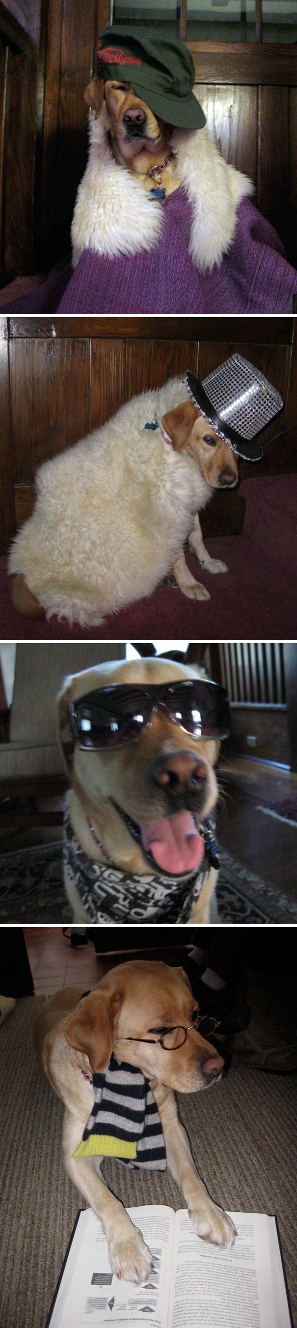 Cosplay cho chó!