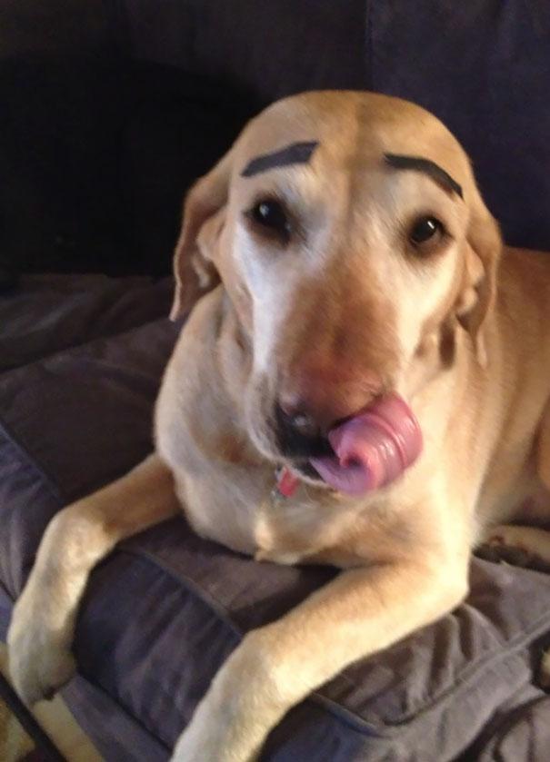 Chịu, chẳng dám giao chó cho ai trông nữa