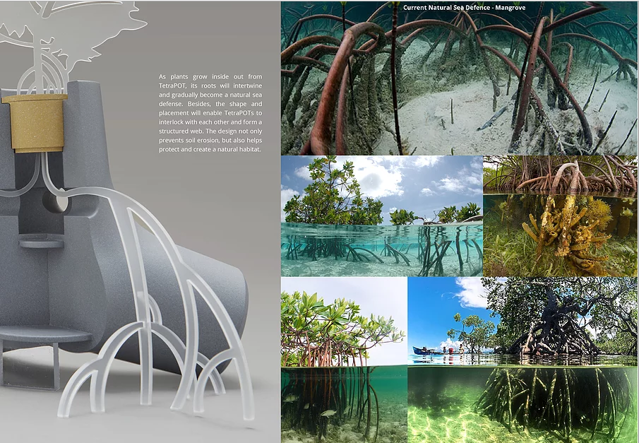 Cấu tạo và sự liên hệ của TetraPot với hệ thống rừng ngập mặn