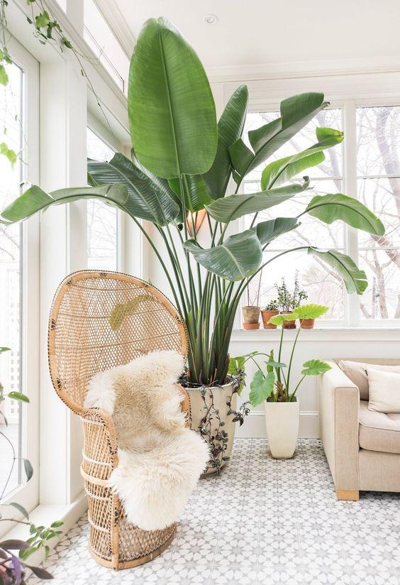 Một chiếc ghế ngồi bằng mây đan sẽ là điểm nhấn không thể thiếu trong một không gian Tropical.