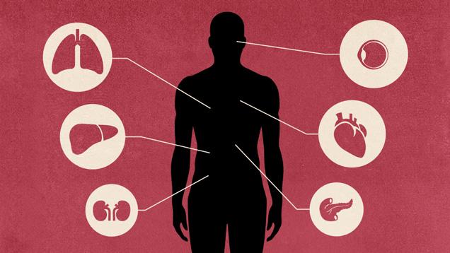 Hiện tại, việc ghép nội tạng từ lợn sang người vẫn là bất khả thi, nhưng tương lai đó đang ngày một gần