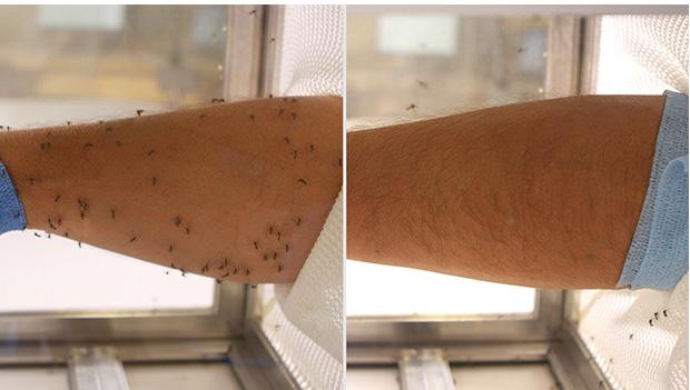 Thử nghiệm hiệu quả của một loại thuốc chống muỗi