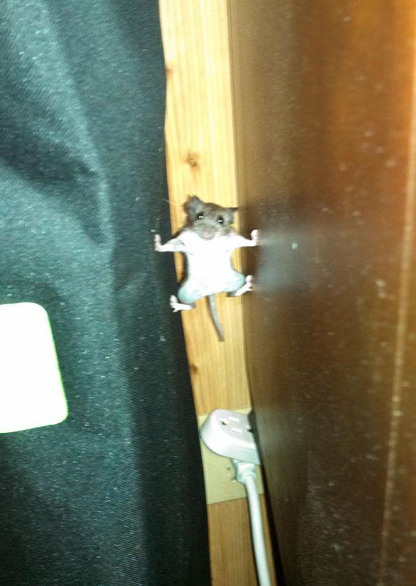 Xin giới thiệu điệp viên James Mouse trong phim Nhiệm vụ bất khả thi