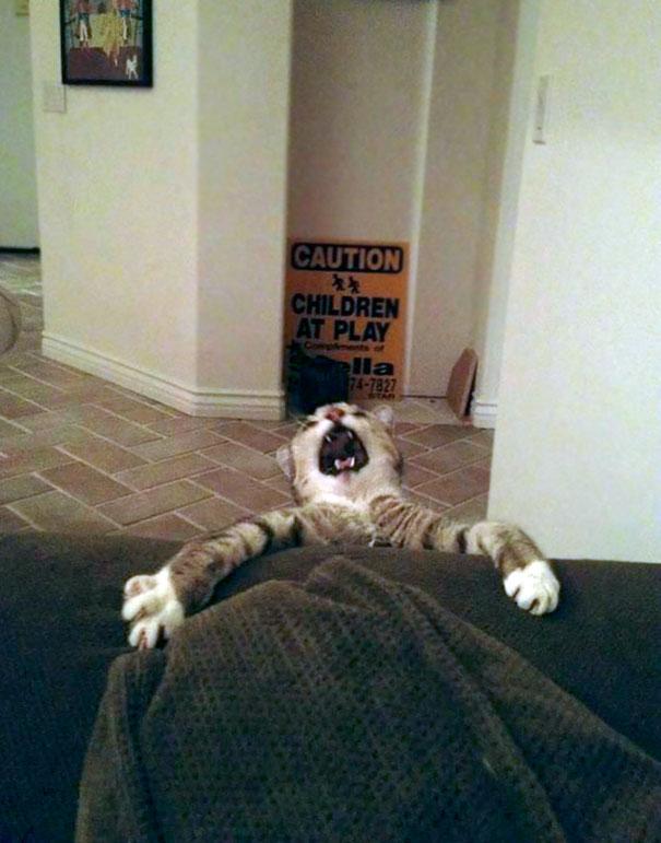 Xin đừng bắt tôi rời khỏi giường...aaaaa