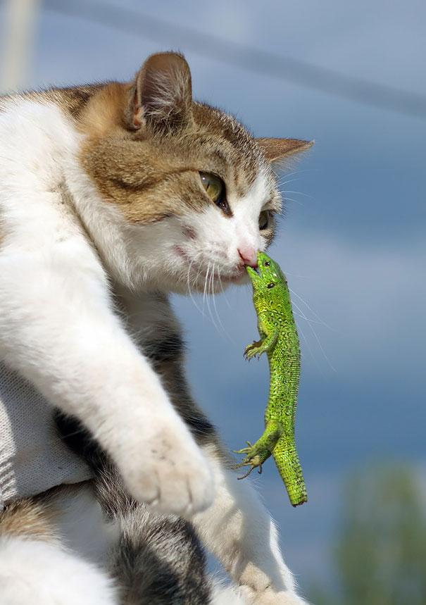 Attack on Titan phiên bản mèo và thằn lằn...