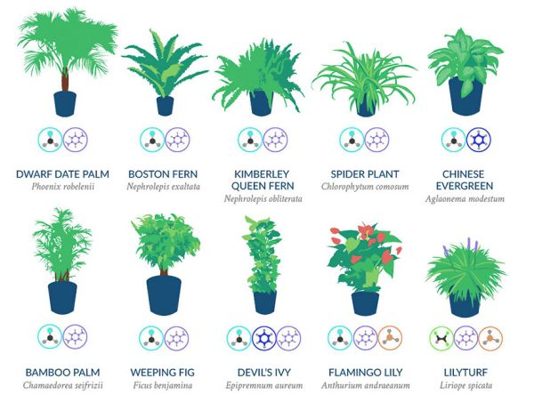 Nasa giới thiệu 17 loại cây cảnh giúp thanh lọc không khí cực tốt, phù hợp cho ngày Tết - Ảnh 1.