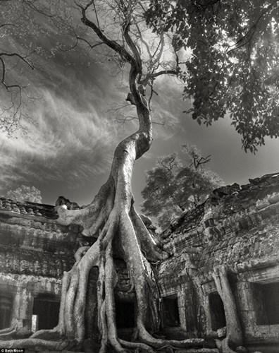 Một bộ rễ khổng lồ của cây Knia bao phủ ngôi đền Ta Prohm, Siem Reap, Campuchia