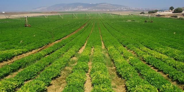 Israel xanh mướt dù là hoang mạc, đất đai cằn cỗi.