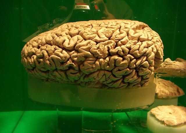 Não của cá nhà táng.