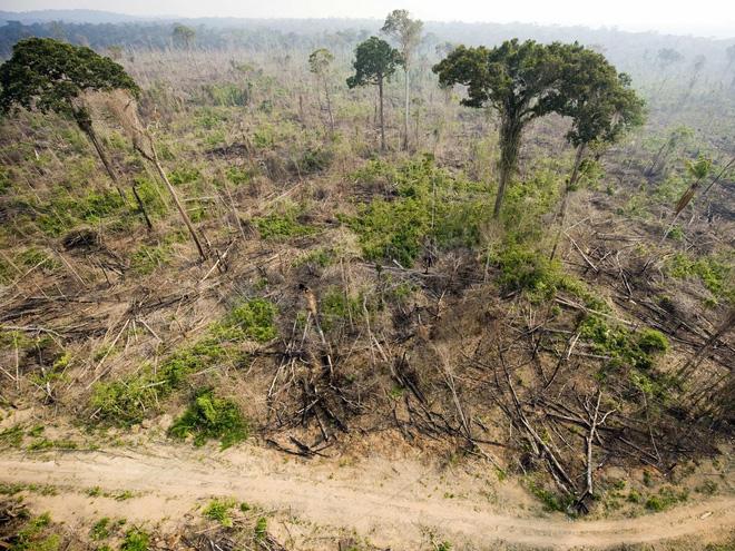 Hơn 20% diện tích rừng Amazon đã bị phá hủy trong những năm gần đây.