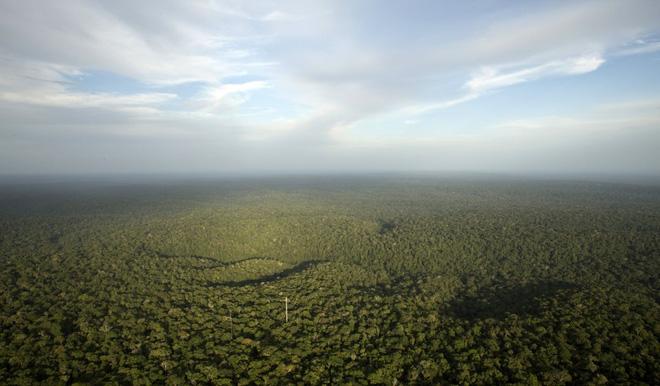 Rừng nhiệt đới luôn luôn là pá phổi xanh của trái đất.
