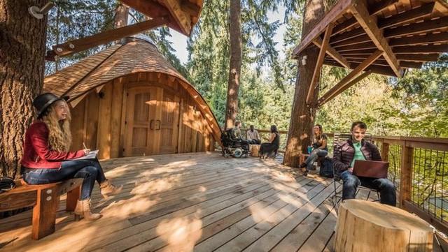Chán văn phòng, Microsoft xây nhà cây cho nhân viên làm việc - Ảnh 2.