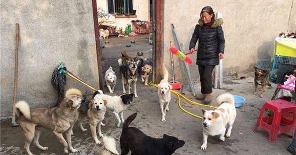 Trung Quốc: Gia đình ly tán, bán hết nhà cửa vì cưu mang 130 con chó bị bỏ rơi - Ảnh 1.