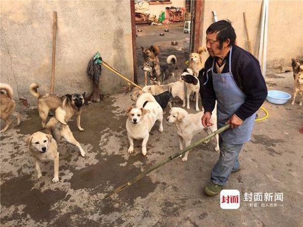 Trung Quốc: Gia đình ly tán, bán hết nhà cửa vì cưu mang 130 con chó bị bỏ rơi - Ảnh 2.