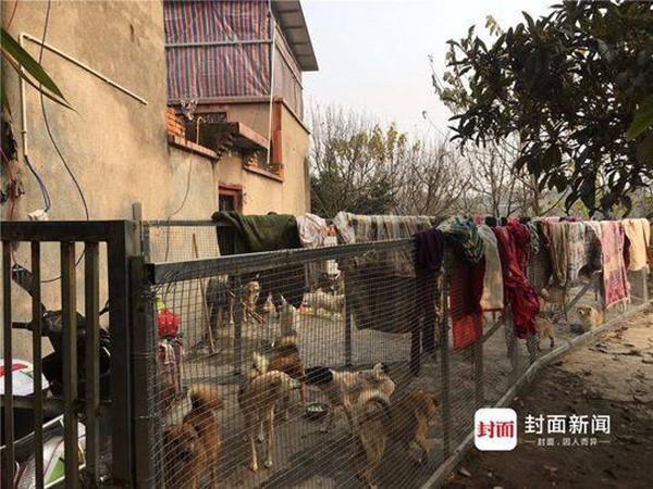 Trung Quốc: Gia đình ly tán, bán hết nhà cửa vì cưu mang 130 con chó bị bỏ rơi - Ảnh 3.