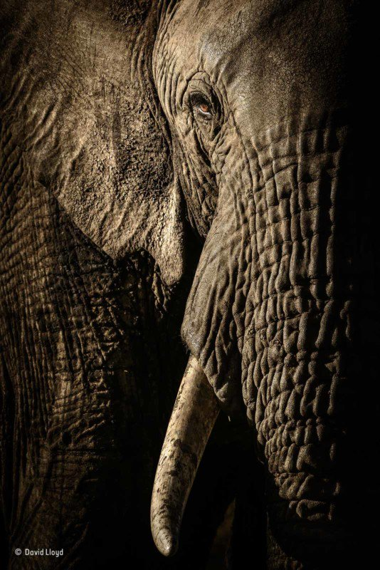 Nhiếp ảnh gia David Lloyd đã chờ cho đàn voi đi dạo đến một hồ nước để chụp được tấm ảnh chân thật và sắc nét này.