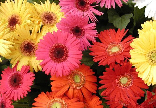 Nasa giới thiệu 17 loại cây cảnh giúp thanh lọc không khí cực tốt, phù hợp cho ngày Tết - Ảnh 13.