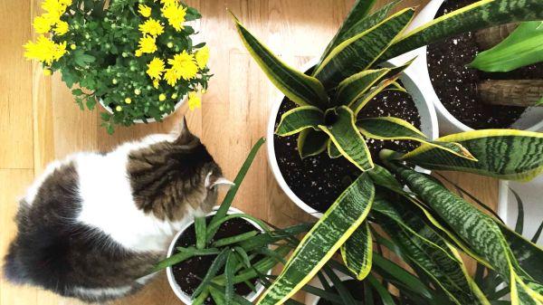 Nasa giới thiệu 17 loại cây cảnh giúp thanh lọc không khí cực tốt, phù hợp cho ngày Tết - Ảnh 16.